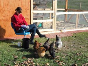 Erin feeding our chickens